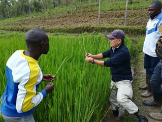 ルワンダ 小規模農家市場志向型農業プロジェクト