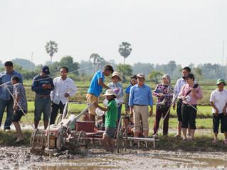 カンボジア 種子生産・普及プロジェクト