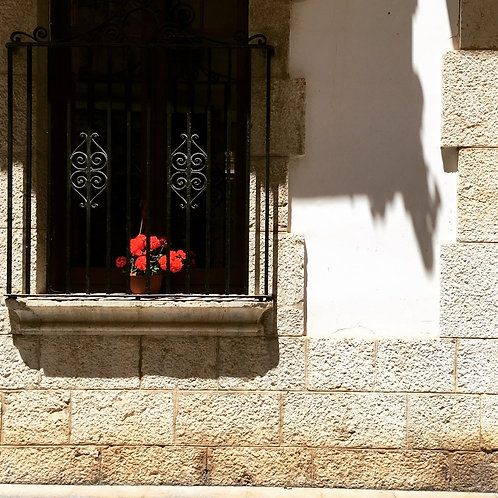 Spanish Roses