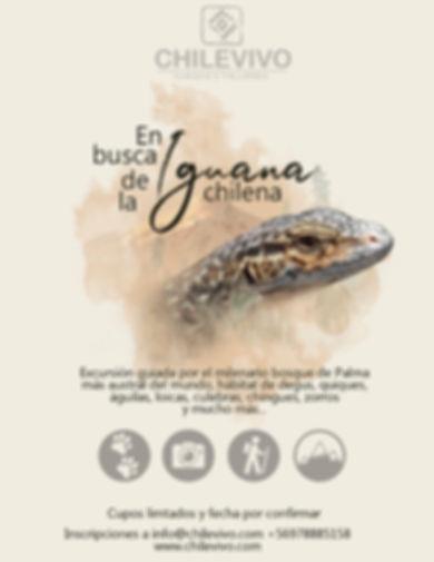 Afiche iguana.jpg