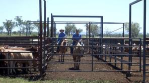 Livestock Staff Benchmarking