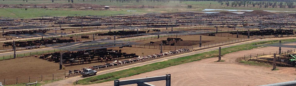 Beef cattle feedlot monitoring