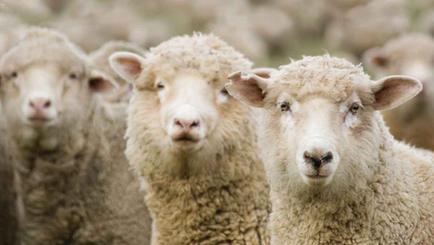 Hylick WP Sheep Minerals