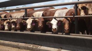 Livestock Nutrition & Health