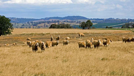 Hylick Sheep Range
