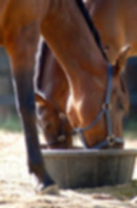 horse nutrition consulting