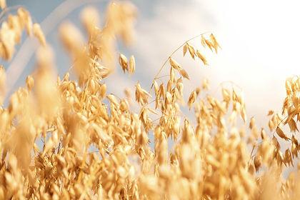 field oats