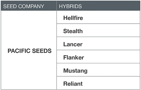 wheat pacific seeds hellfire, stealth, lancer, flanker, mustang, reliant