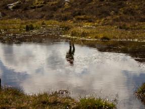 Reflections on Shetland