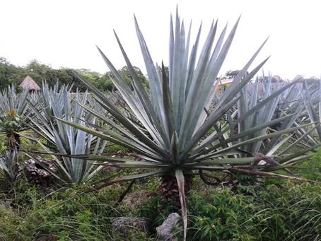 Hacienda Sotuta de Peón - Yucatán
