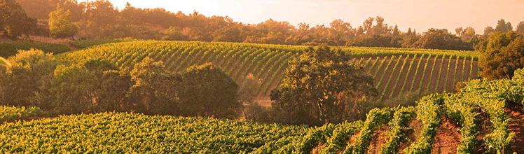 wine country vineyard