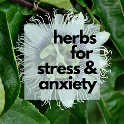 herbs for stress & anxiety.png