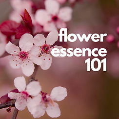 flower essence 101.png