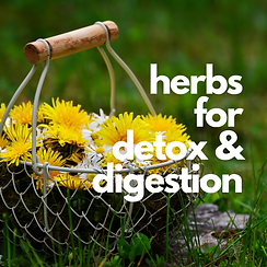 herbs for digestion & detox.png