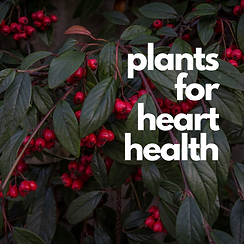 plants for heart health.png