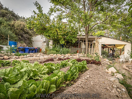 Our organic garden for our vegetarian yoga kitchen