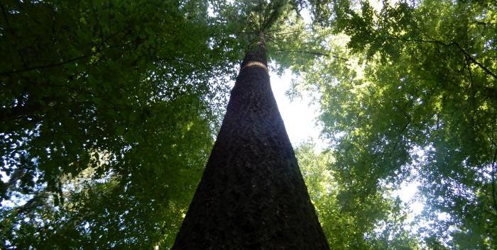 20190825_zum_höchsten_Baum_09.jpg