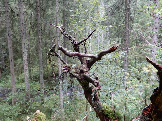 Rötenbachschlucht (9)