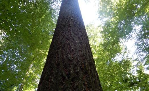 20190825_zum_höchsten_Baum_10.jpg