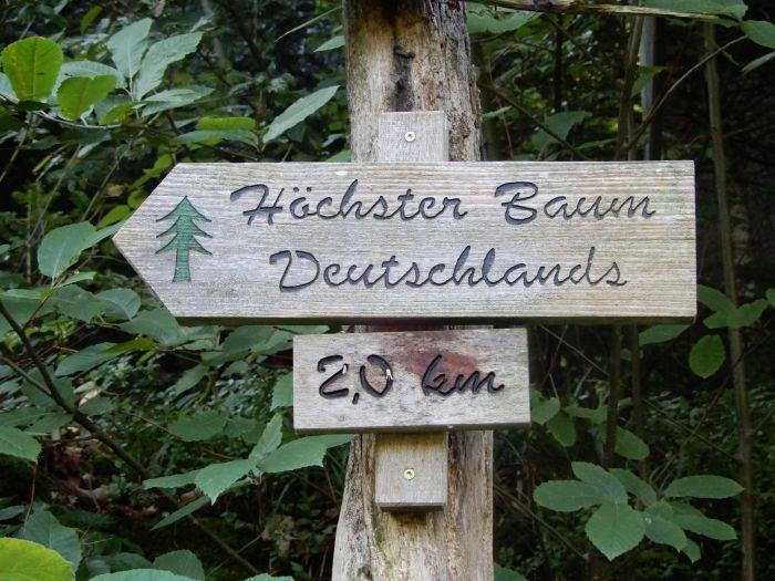 20190825_zum_höchsten_Baum_05.jpg