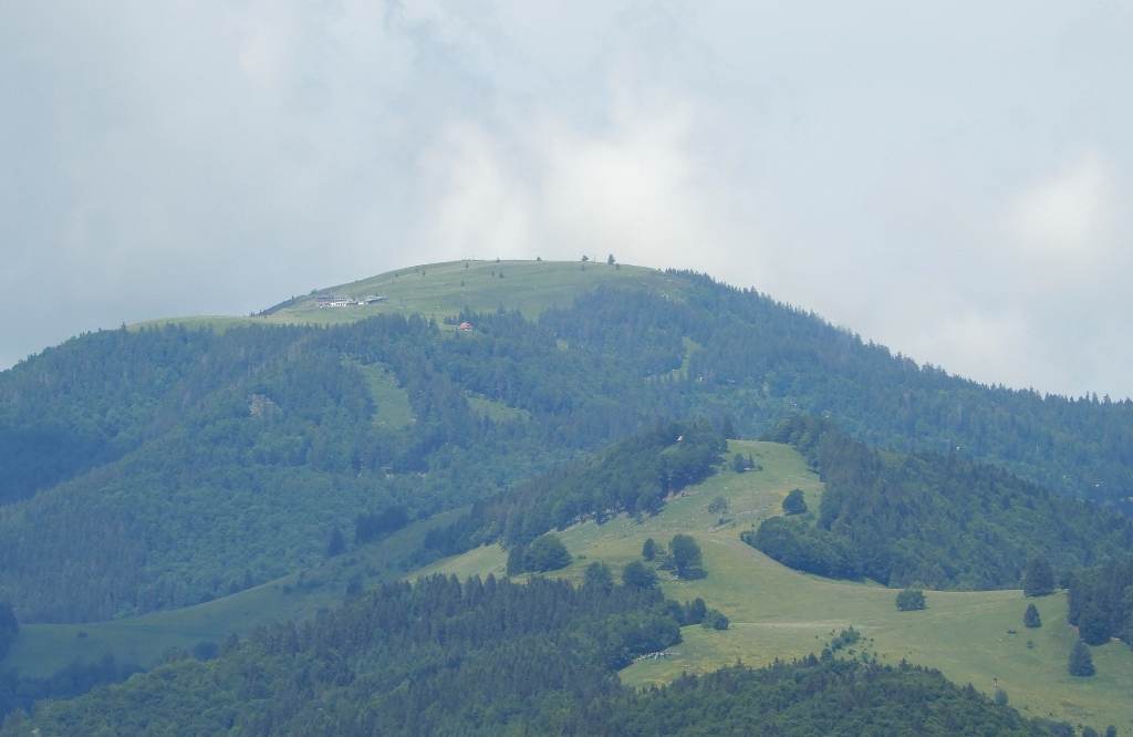 20180603_Schönau-Urwaldpfad_13