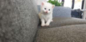 Ziva 3,5 weeks old (3).jpg