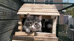 Cattery Erika's Toby (10).jpg
