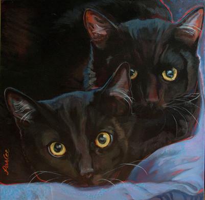 Good Cats Moe & Curly.jpg