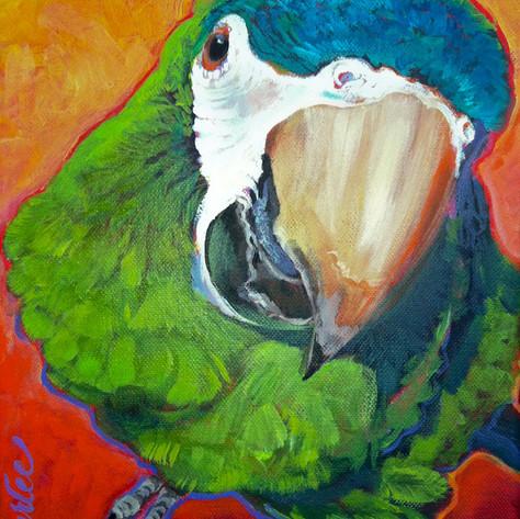 Good Bird Mac.jpg