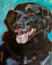 Good Dog Shelby-1.jpg