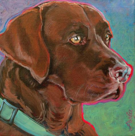 Good Dog Tess.jpg
