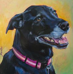 GOOD DOG PEPPER-0004.jpg