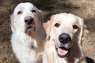Good Dogs Carico-4.jpg