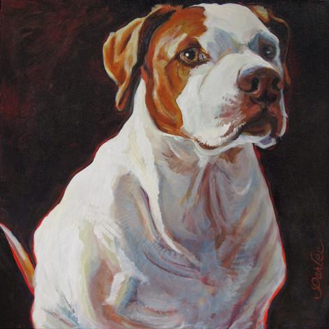 Good Dog Dexter.jpg