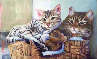 Good Cats .jpg