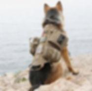 dog packs.JPG