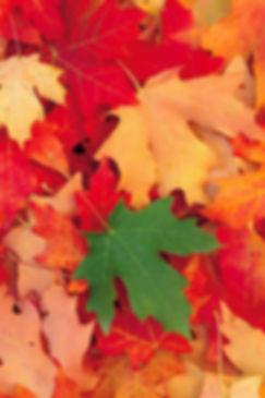 ou-partir-en-voyage-cet-automne-blog-voy