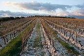 Sol argilo calcaire, les terres blanches, domaine en bio et en biodynamie, hérault, languedoc, saint chinian