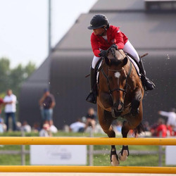 Showjumping competition