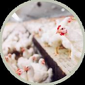 indoor-chicken-farm-icon.png