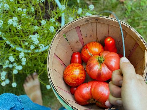 90 Minute Garden Consultation