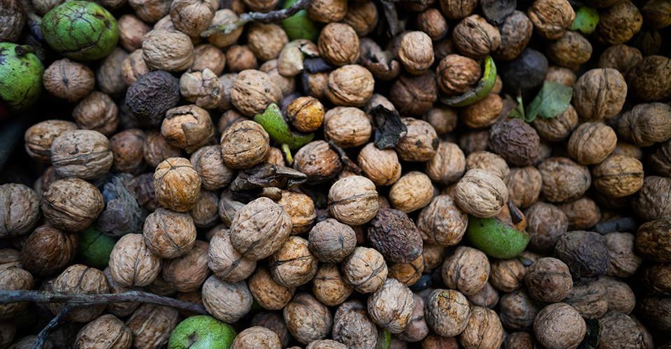 walnuts-uc-davis_0.jpg