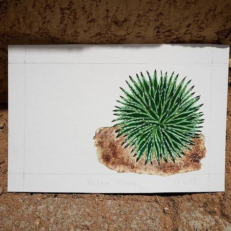 Yucca Plant 7/26/18