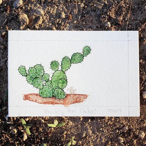 Prickly Pear Cactus 7/16/18