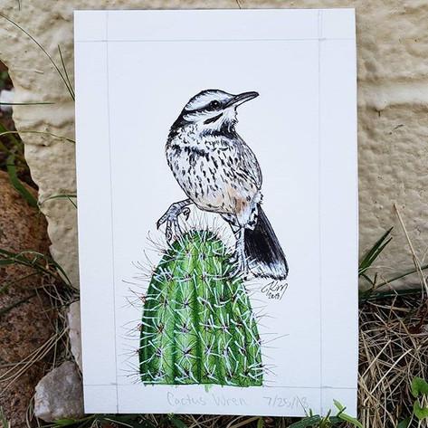 Cactus Wren 7/25/18
