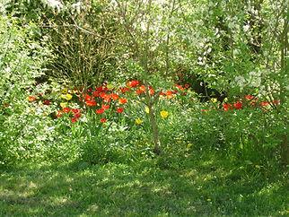 jardin fleuri toute l'année