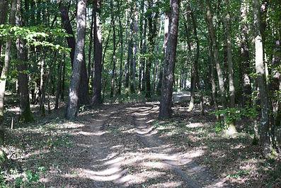 chemin privé dans les bois, dépaysement total