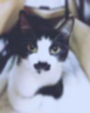 SPA-AR2017-BW-Cat.jpg