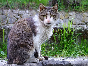 cat-1399848.jpg