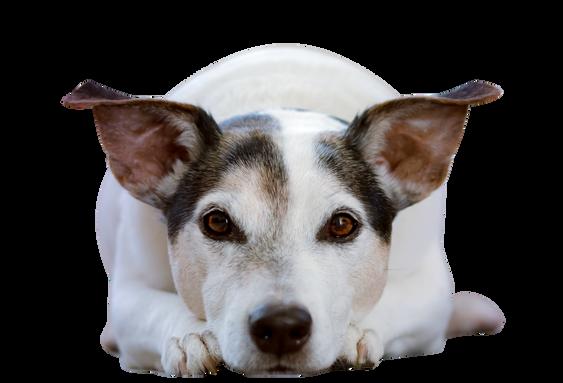 adorable-animal-animal-photography-canin